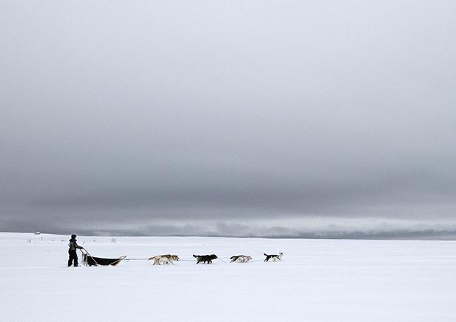 Sledge ride with huskies
