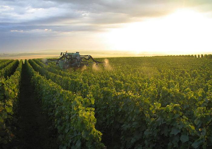 Wijngaard la Vinyeta