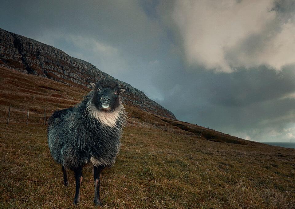 De Faeröer eilanden, 9 weetjes | Faroe Islands, 9 things to know before you go